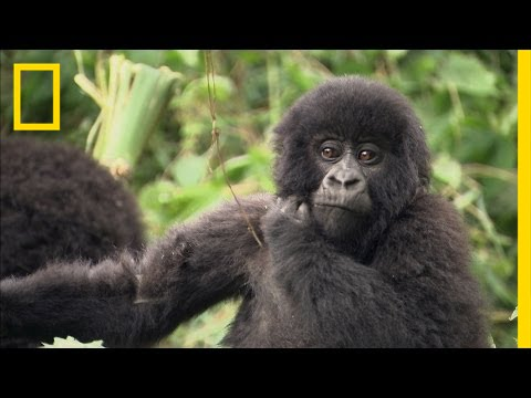 Endangered Species Defender Wins Nat Geo's Highest Honor | National Geographic thumbnail