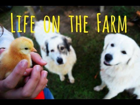 The Alabama Farm | Part 1 of 2
