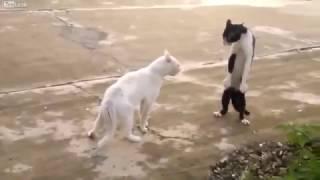 Смешное видео про котов! Лучшие видео приколы про кошек! 2017