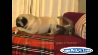 Лучшая подборка новых приколов с животными Кошки и собаки Юмор