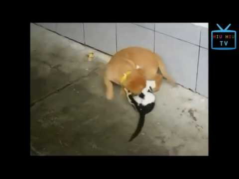 Funny Animal Mating - Funny Bad Cats Videos Compilation Part 1 Funny Bad Animals