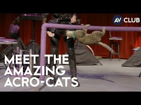 The Incredible Acro-Cats Put On Quite the Show!
