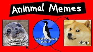 Aninmal Memes