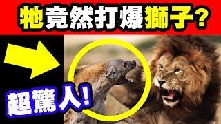 10大現存咬合力最強生物|極度意外!這隻超級不起眼的動物竟然幹掉鯊魚、獅子、老虎!!|中集