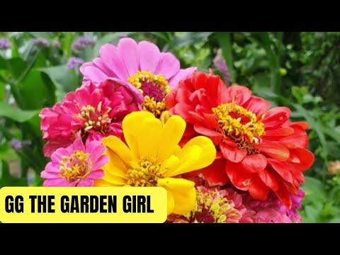, title : 'Garden Tour And Tomato Update • Summer 2021 • NSW Australia • Week 1 Year 3
