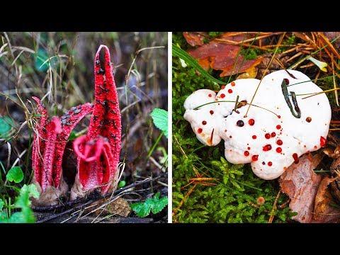 Fungus baga kaysa sa pagalingin