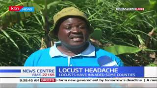 Western Kenya farmers want the government to apply necessary measures in containing locust menace