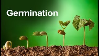 Class 5 Science | Plant Germination - Learn About Seed Germination  | Pearson