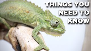 Watch This BEFORE Getting A Pet Chameleon!
