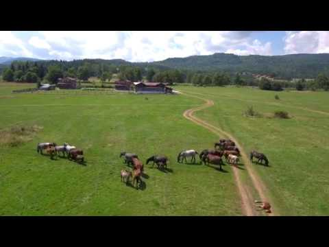 WILD HORSES MEETING XIAOMI MI 4K DRONE