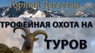 Трофейная охота на туров  Горный Дагестан  Цунта