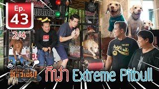 กีฬาสุนัขพิทบูล  (Extreme Pitbulls Impossible Power )- เพื่อนรักสัตว์เอ๊ย EP.43 (2/4)