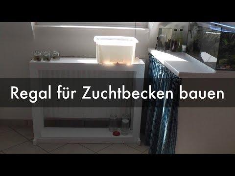 Regal für Wasserfloh-Zuchtbecken bauen | Building a stand for my Daphnia breeding tank