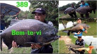 Grandes Pirararas e Tambacus no Bem-te-vi - Fishingtur na TV 389
