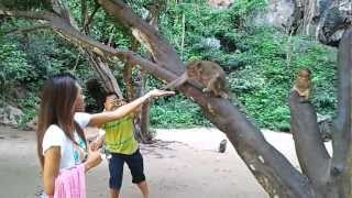 preview picture of video 'Monkeys' temple. Suwankhuha Temple.'