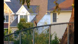 Juvenile Hawk Hanging out in Columbus NJ 08022