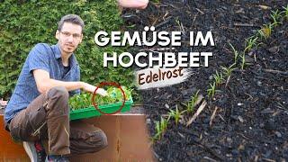 Bepflanzung im Hochbeet - Das wächst zur Zeit im Garten