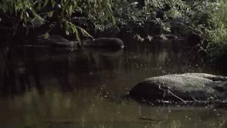 Video Řeka