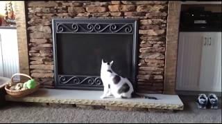 Смешные видео про животных Смешные ролики про животных