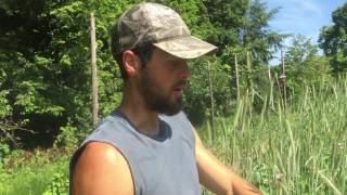 Cutting Rye Cover Crop