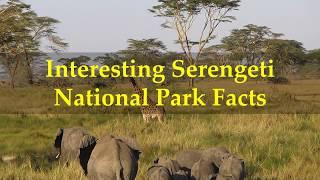 Interesting Serengeti National Park Facts