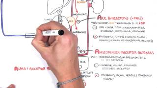Ahoj New Video on Antihypertensives This is a pharmacology video that looks
