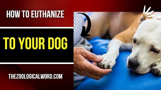 Top 10 Best Way |How to euthanize a dog|
