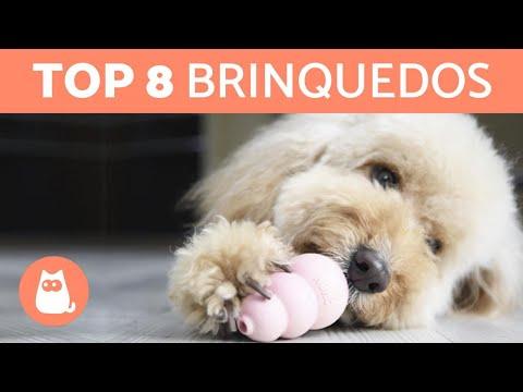 8 melhores para cachorro