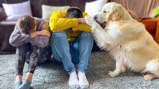 Golden Retriever Dog Reacts When My Wife And I Are Sad