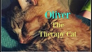 Oliver~The Therapy Cat