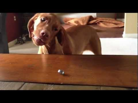 Watch: Dog Hates Wedding Rings, Is Utterly Terrified by Them