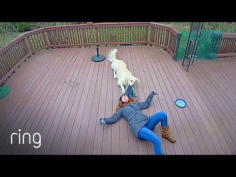 Playful Dog Drags Human Around