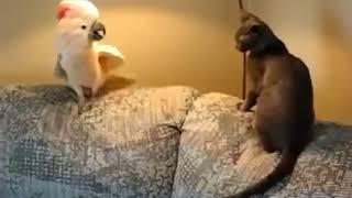 Смотрите не пожалеете  Короткие но очень смешные приколы с животными #2