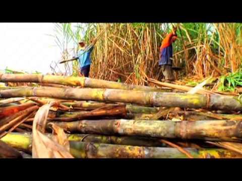 Halamang-singaw ng kuko plates sa kanilang mga paa
