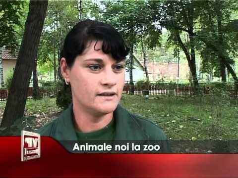 Animale noi la zoo