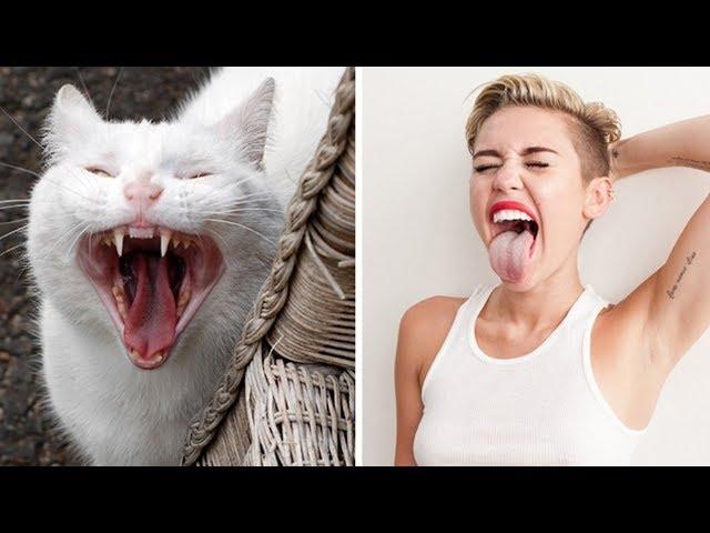 Коты которые похожи на людей, животных и предметы