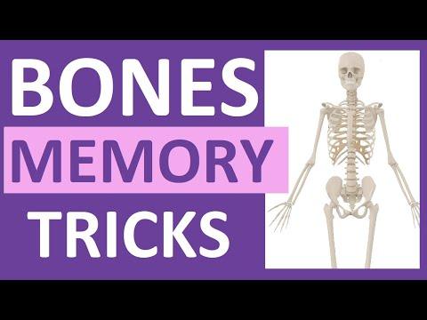 How to Learn the Human Bones | Tips to Memorize the Skeletal Bones