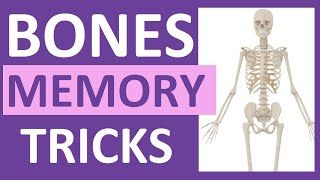 How to Learn the Human Bones   Tips to Memorize the Skeletal Bones Anatomy & Physiology