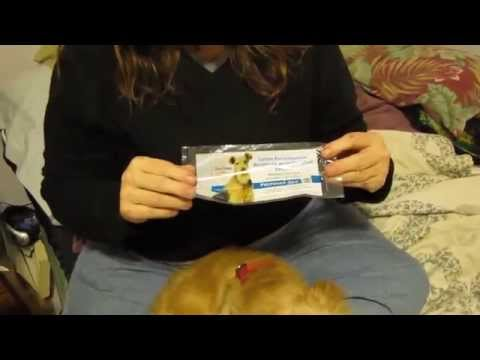 Administering Nasal Bordetella Vaccine - Kennel Cough