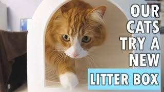 "Our cats try a ""litter tracking prevention"" litter box"