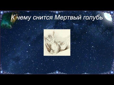 К чему снится Мертвый голубь (Сонник)