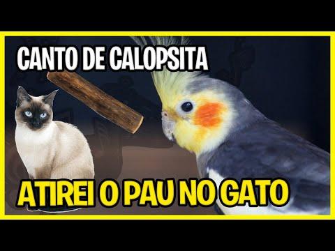 Canto de Calopsita - Atirei o Pau No Gato