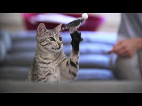 Graffi del gatto sui mobili di casa? Tiragraffi per gatti