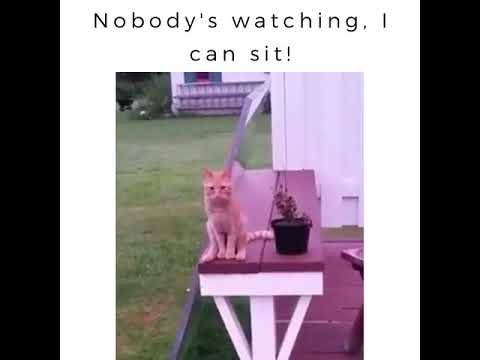 Nobody's watching, Cat can sit!