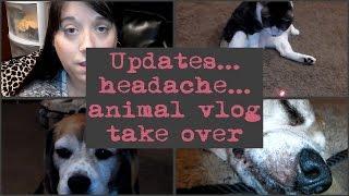 Updates, headache, animal vlog take over