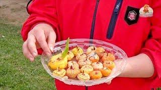 Смотреть онлайн Подробно как правильно сажать гладиолусы весной