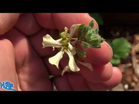 La bella bionda con lentiggini
