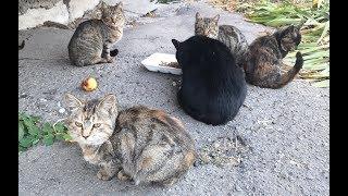 Кормим семью кошек, Милашки дождались завтрака