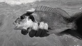 Rockfishing (bucktail pardo) Espáridos Canarias 2017