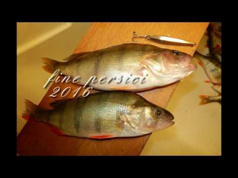 Le serie per pescare durante compleanno